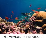 beautiful coral reef with lots... | Shutterstock . vector #1113738632