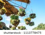 garden designs with hanging... | Shutterstock . vector #1113778475
