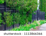wrought iron gates  ornamental... | Shutterstock . vector #1113866366