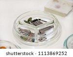 dental drill burs. dental...   Shutterstock . vector #1113869252