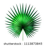 fan palm leaf isolated on white ... | Shutterstock . vector #1113873845