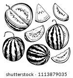 Watermelon Sketch. Hand Drawn...