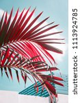 red colored palm tree against... | Shutterstock . vector #1113924785