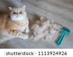 a red cat and combed hair of a... | Shutterstock . vector #1113924926