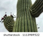 Timeless Close Up Of A Saguaro...