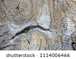 texture of an old sawn wood. a... | Shutterstock . vector #1114006466