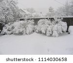 Snow Covered Yard With Trees ...