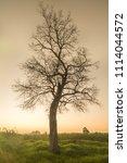a beautiful landscape the...   Shutterstock . vector #1114044572