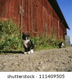 Young Cats In Front Of A Barn