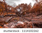 Large Trees Destroyed By Fire