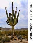 saguaro cactus cereus giganteus ... | Shutterstock . vector #1114103402