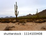 saguaro cactus cereus giganteus ... | Shutterstock . vector #1114103408