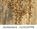 image of termites are on stumps.... | Shutterstock . vector #1114124798