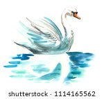 Watercolor White Swan On The...