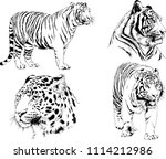 vector drawings sketches... | Shutterstock .eps vector #1114212986