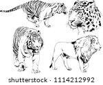 vector drawings sketches... | Shutterstock .eps vector #1114212992