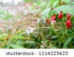 raindrops on fresh flower after ... | Shutterstock . vector #1114225625