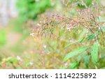 fresh small flower after rain... | Shutterstock . vector #1114225892