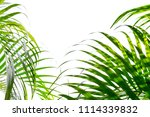 bushes of green palm leaves... | Shutterstock . vector #1114339832