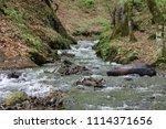 bolu  yedig ller national park  ... | Shutterstock . vector #1114371656
