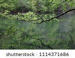 bolu  yedig ller national park  ... | Shutterstock . vector #1114371686