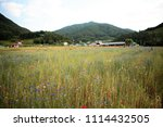 south korea blue cornflower | Shutterstock . vector #1114432505