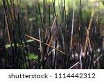 texture of grass.   Shutterstock . vector #1114442312
