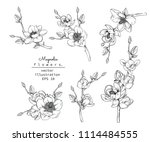 sketch floral botany collection.... | Shutterstock .eps vector #1114484555