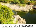 swamp and grass of everglades... | Shutterstock . vector #1114484732