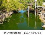 swamp and grass of everglades... | Shutterstock . vector #1114484786