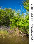 swamp and grass of everglades... | Shutterstock . vector #1114484816