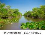 swamp and grass of everglades... | Shutterstock . vector #1114484822