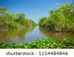 swamp and grass of everglades... | Shutterstock . vector #1114484846