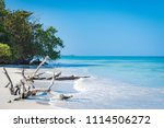 driftwood and bent trees by the ... | Shutterstock . vector #1114506272