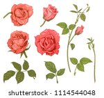 set of roses  pink  red flowers ...   Shutterstock .eps vector #1114544048