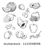 vector line drawing of various... | Shutterstock .eps vector #1114548098
