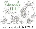 set vector hand drawn pomelo...   Shutterstock .eps vector #1114567112