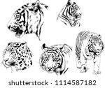 vector drawings sketches... | Shutterstock .eps vector #1114587182