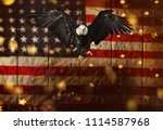 north american bald eagle... | Shutterstock . vector #1114587968
