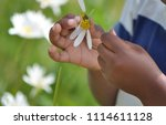 close up of a child pulling... | Shutterstock . vector #1114611128