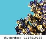 forget me not flower  angelonia ... | Shutterstock . vector #1114619198