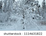wonderful winter forests... | Shutterstock . vector #1114631822