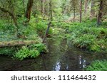 River Beween Trees In Largest...
