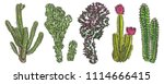exotic cactus succulents set.... | Shutterstock .eps vector #1114666415