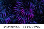 tropical leaf forest glow in... | Shutterstock . vector #1114704902