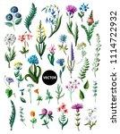 big set of wild flowers... | Shutterstock .eps vector #1114722932
