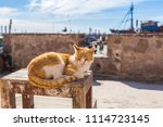 Nice Cat Sunbathing In The...