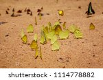 butterfly in pang sida national ... | Shutterstock . vector #1114778882