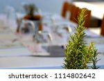 rosemary herb and background... | Shutterstock . vector #1114802642