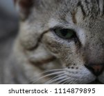 closeup of cat face with... | Shutterstock . vector #1114879895